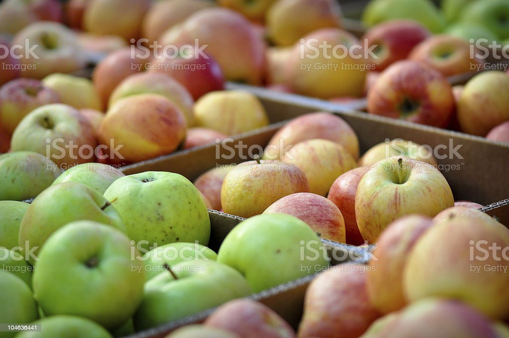 Delicious Apples Boxed and Ready to Sell stock photo