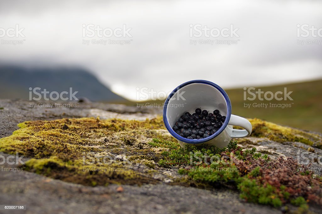 Delicious blueberries displayed in cup picked from rich Swedish grounds foto