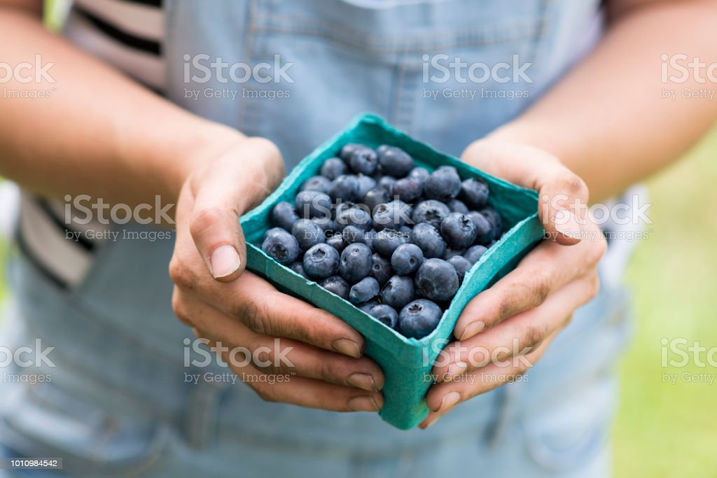 Delicious Blueberries stock photo