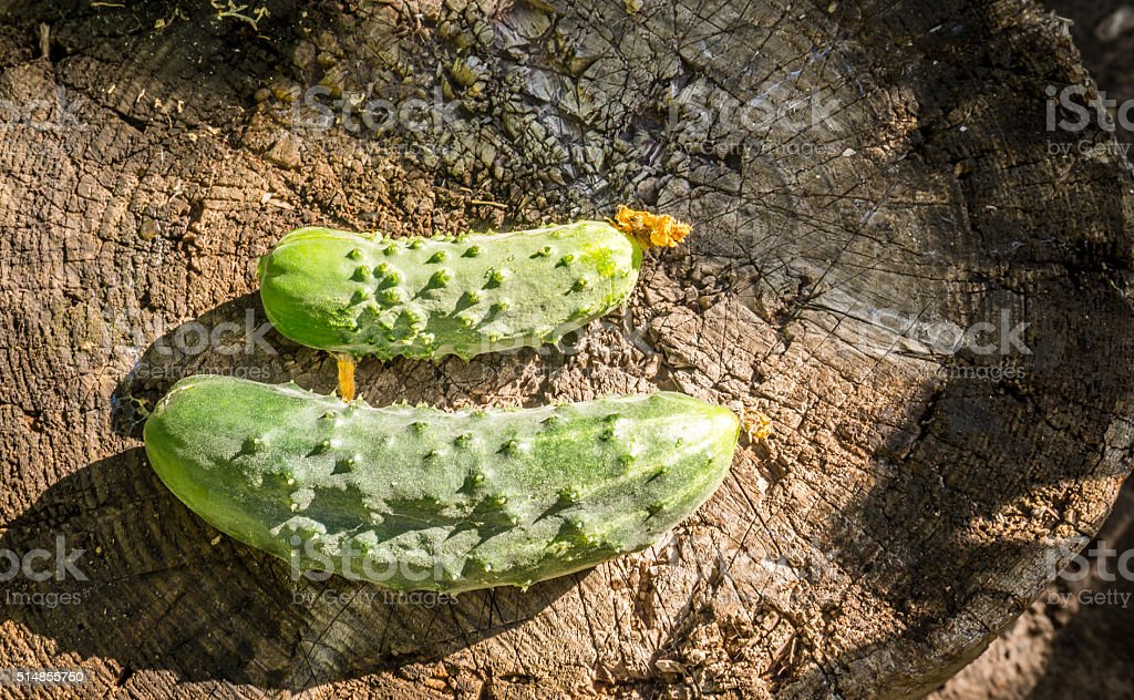 Delicious cucumbers-gherkins on the background of old wooden planks. stock photo