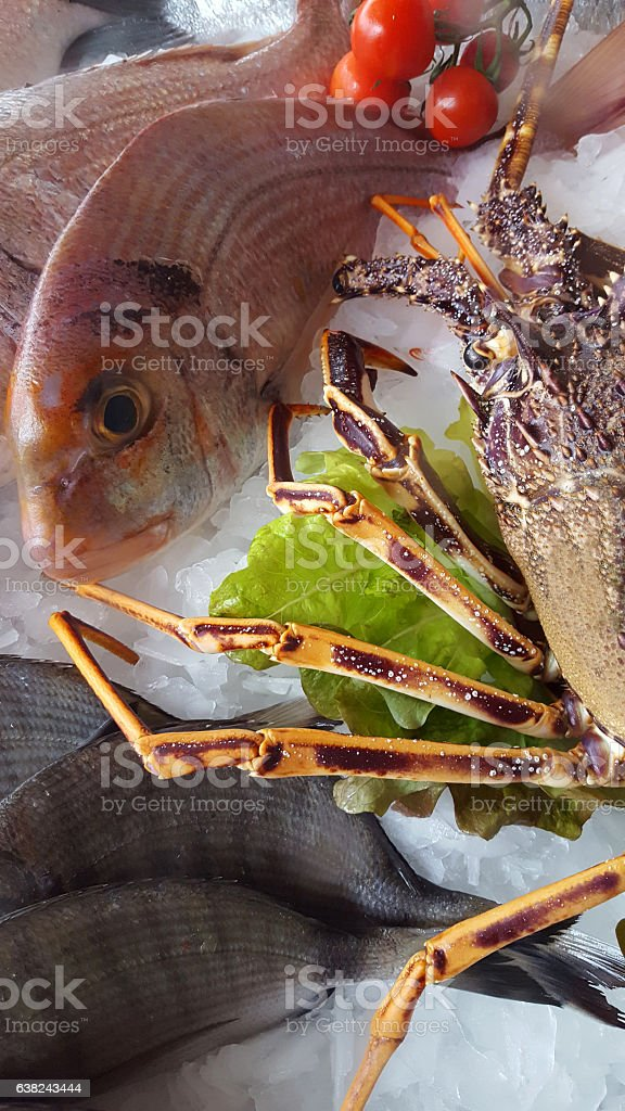 delicious fresh fish on ice - Lobster, porgy, dentex stock photo