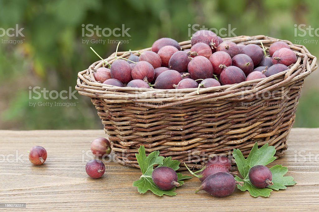 delicious gooseberries stock photo