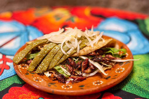 Delicious Mexican taco with grasshoppers, nopales and onion