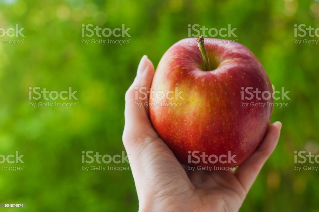 Delicious red apple in a hand on green summer background royalty-free stock photo