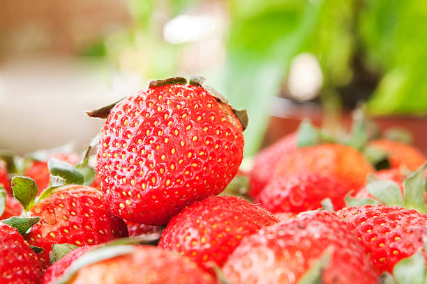 Delicious Red Strawberries stock photo