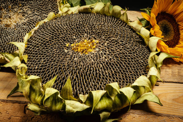 delicious sunflower on an old wooden table on a black background