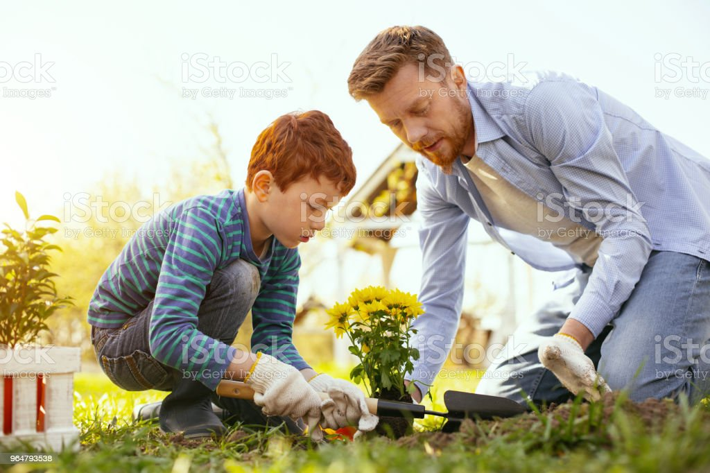 Delighted nice boy helping his father royalty-free stock photo