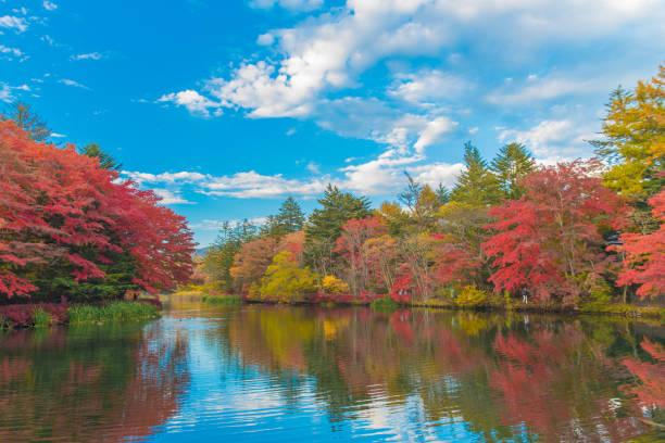 couleurs d'automne délicieux de l'étang de kumoba à karuizawa, japon - feuillage automnal photos et images de collection