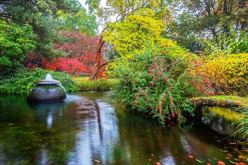 Delightful pink and yellow flowers in a Japanese garden in Leverkusen - the autumn beauty of nature in Germany (North Rhine-Westphalia). Pond and small barrel fountain
