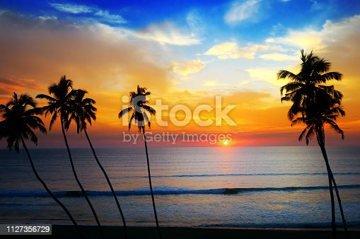 Delightful sunset over the ocean. Against the sky the dark silhouette of a coconut trees.