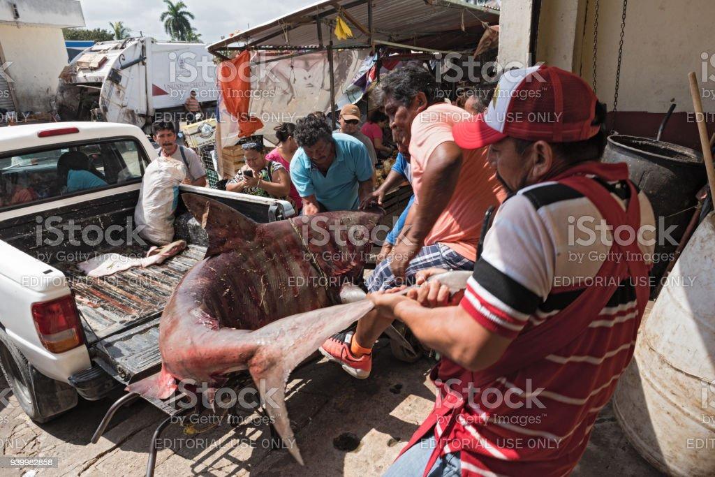 Delivery of a shark to the fish department of the Mercado Principal in San Francisco de Campeche, Mexico stock photo