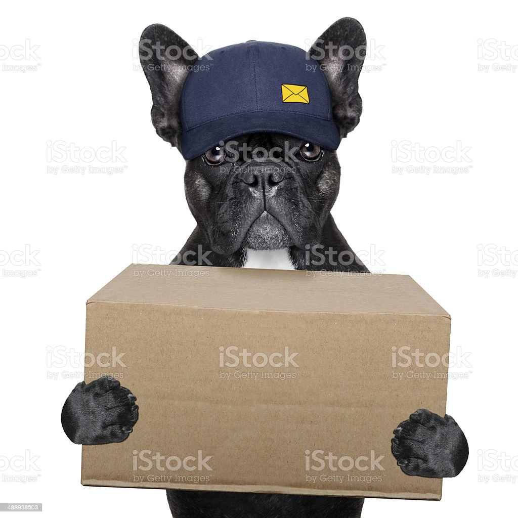delivery post dog stock photo
