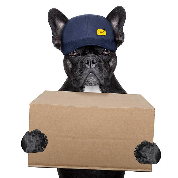 dostawa i pies - bokser pies zdjęcia i obrazy z banku zdjęć