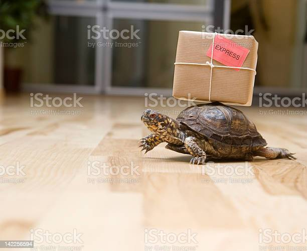 Delivery turtle picture id142256594?b=1&k=6&m=142256594&s=612x612&h=yyiwnbkaz2zbpkwx0p wd6qtf3rigrheb0x1pc36spm=