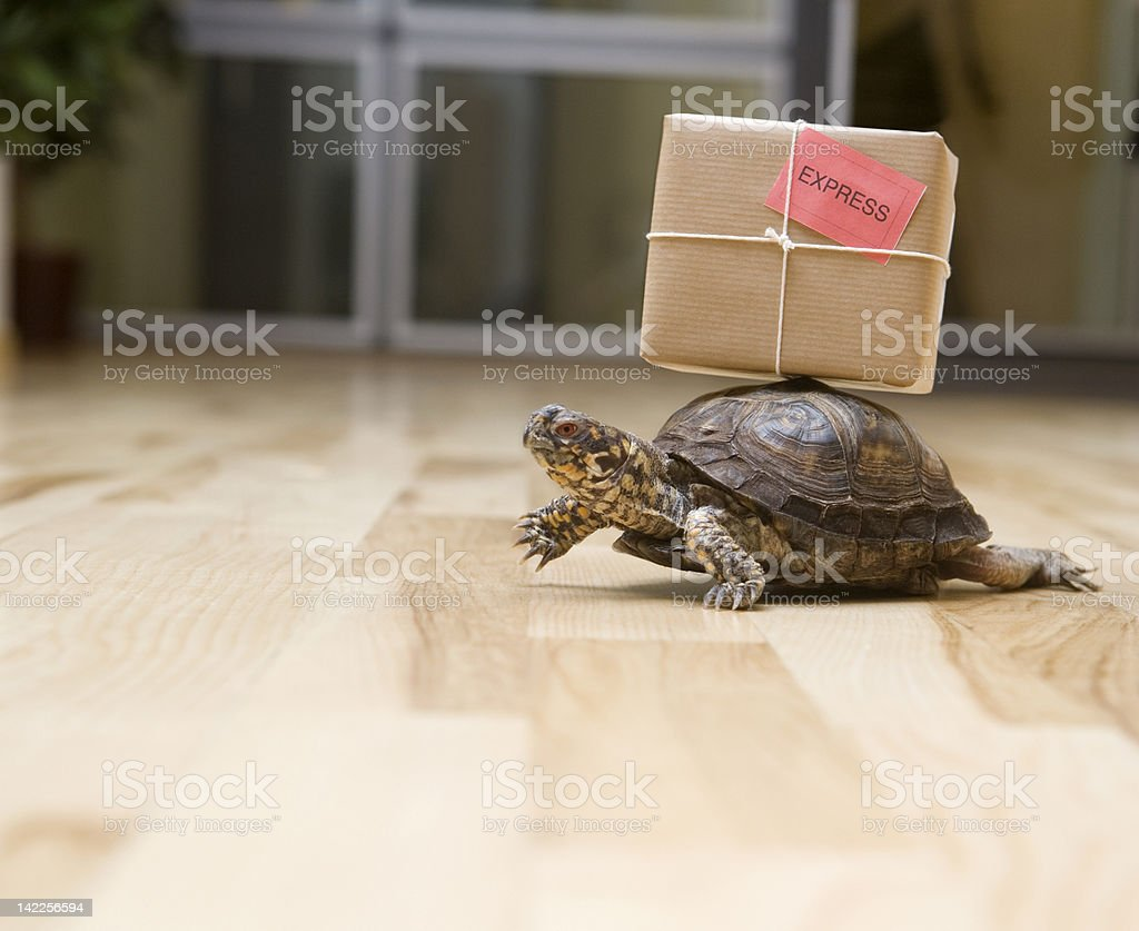 Delivery Turtle stock photo