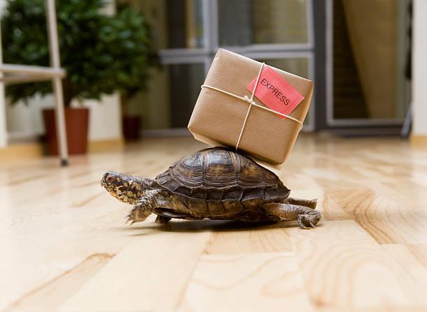 delivery turtle - langzaam stockfoto's en -beelden