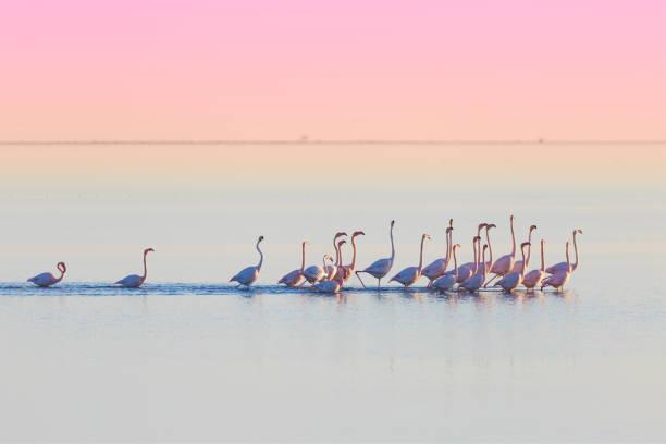 Delta del Ebro, Tarragona, Espagne - Photo