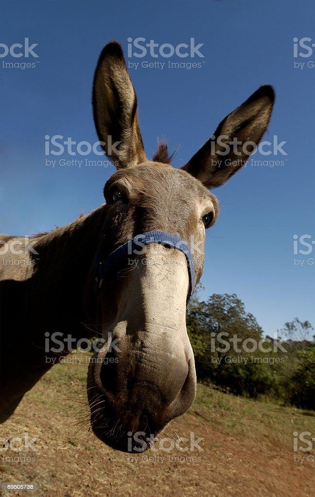 Democrat royalty-free stock photo