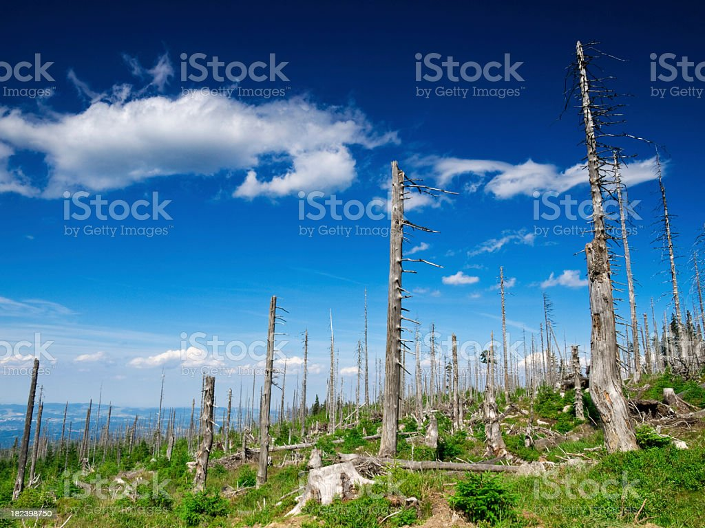 Demolished and dead trees against blue with white clouds stock photo