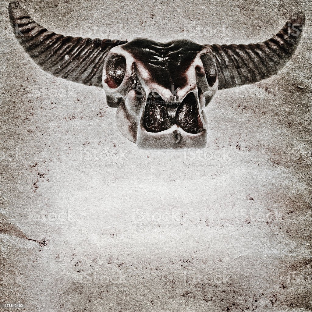 demon bull skull old grunge paper texture royalty-free stock photo