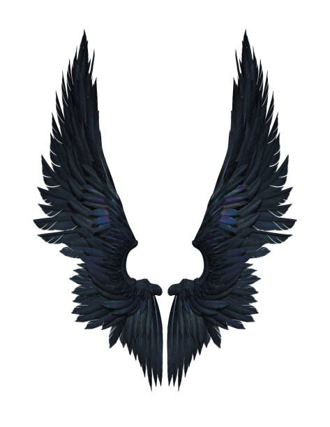 demon wings, black wing plumage isolated on white background - ala di animale foto e immagini stock