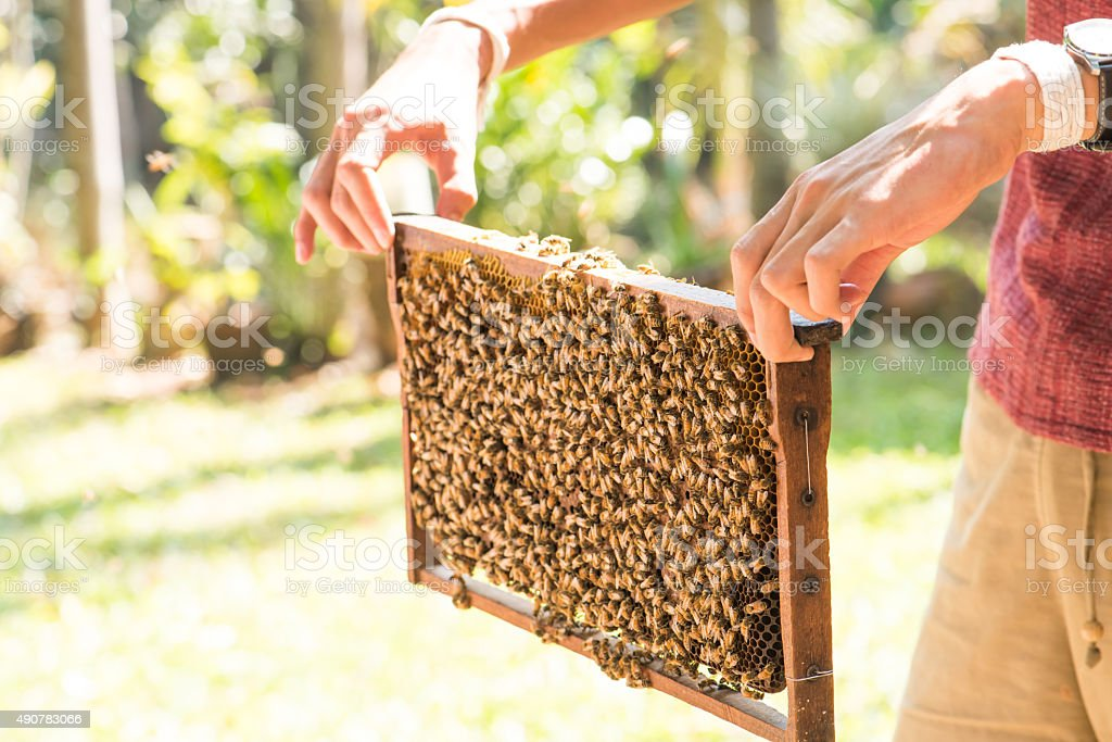 Demonstration about bee keeping for traveller stock photo