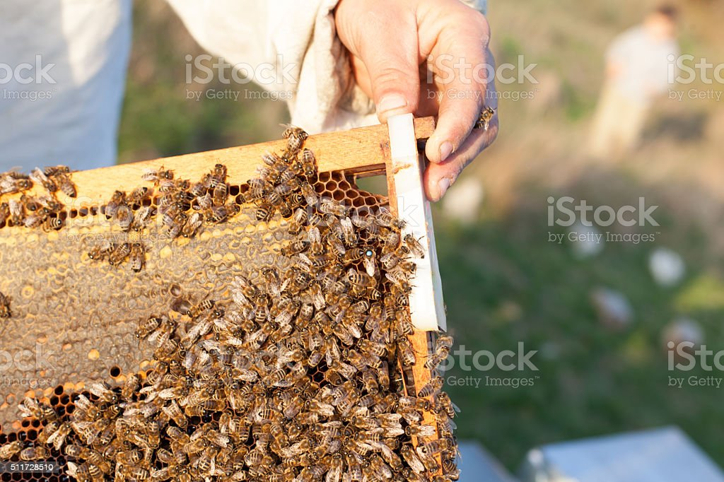 demonstration about bee keeping stock photo