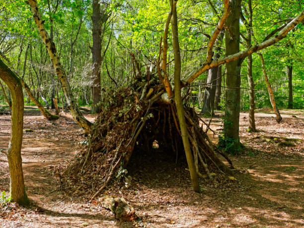 A den in Sherwood Forest In a clearing in Sherwood Forest is a childs den, made of branches, twigs and fallen leaves. sheltering stock pictures, royalty-free photos & images