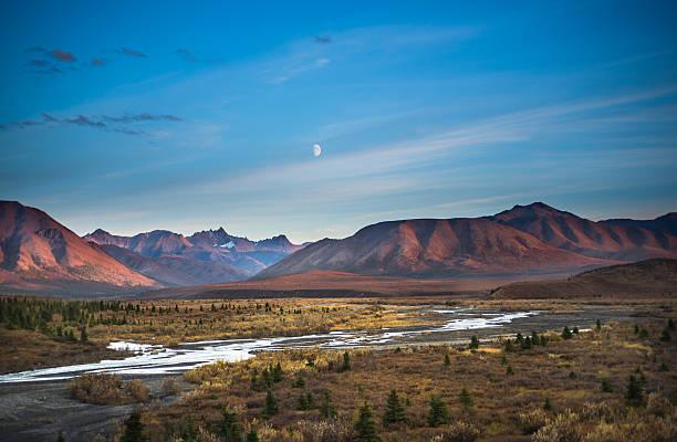 denali, alaska - denali national park bildbanksfoton och bilder