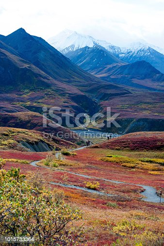Autumn comes early in Denali National Park, but when it does, the colors are spectacular, Alaska.