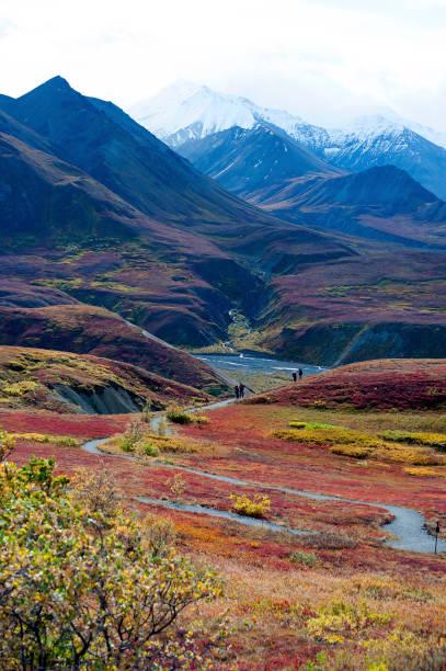 Couleurs d'automne de Denali - Photo
