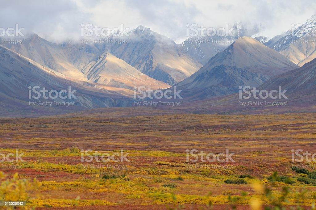 Denali fall colors stock photo