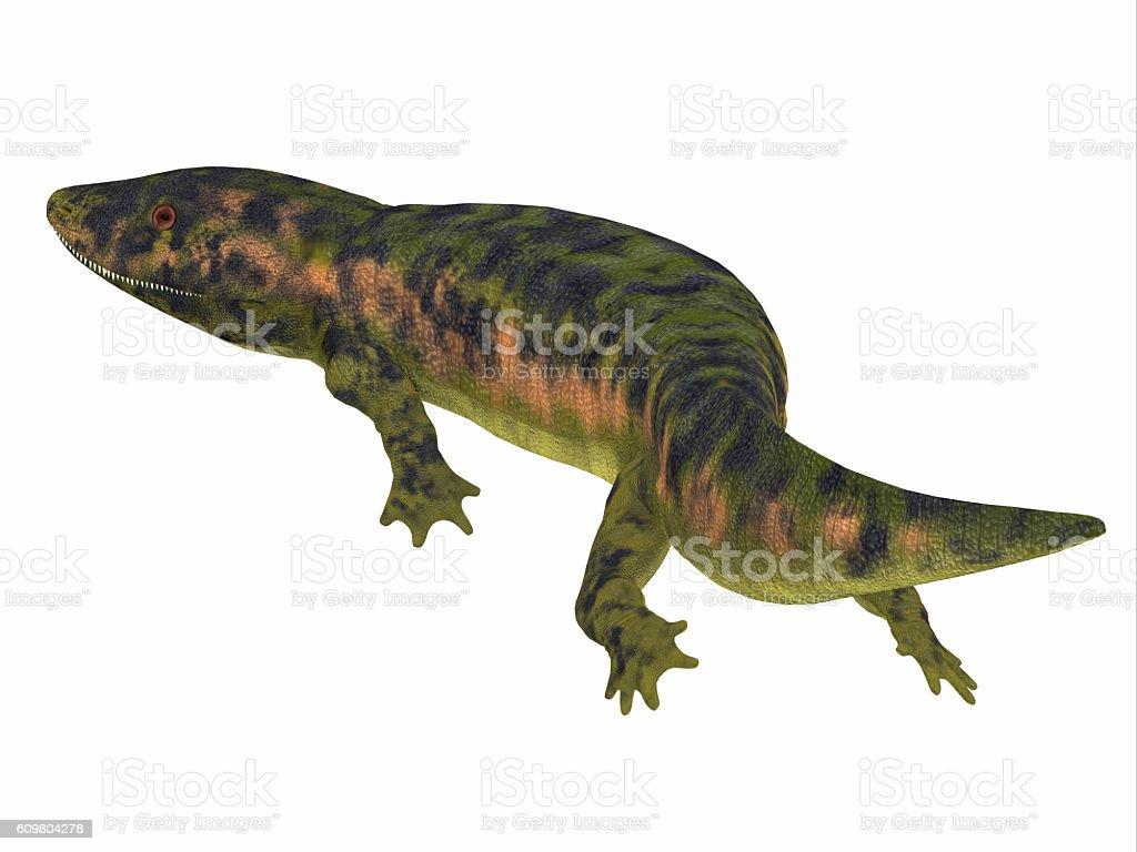 Dendrerpeton Amphibian Tail stock photo