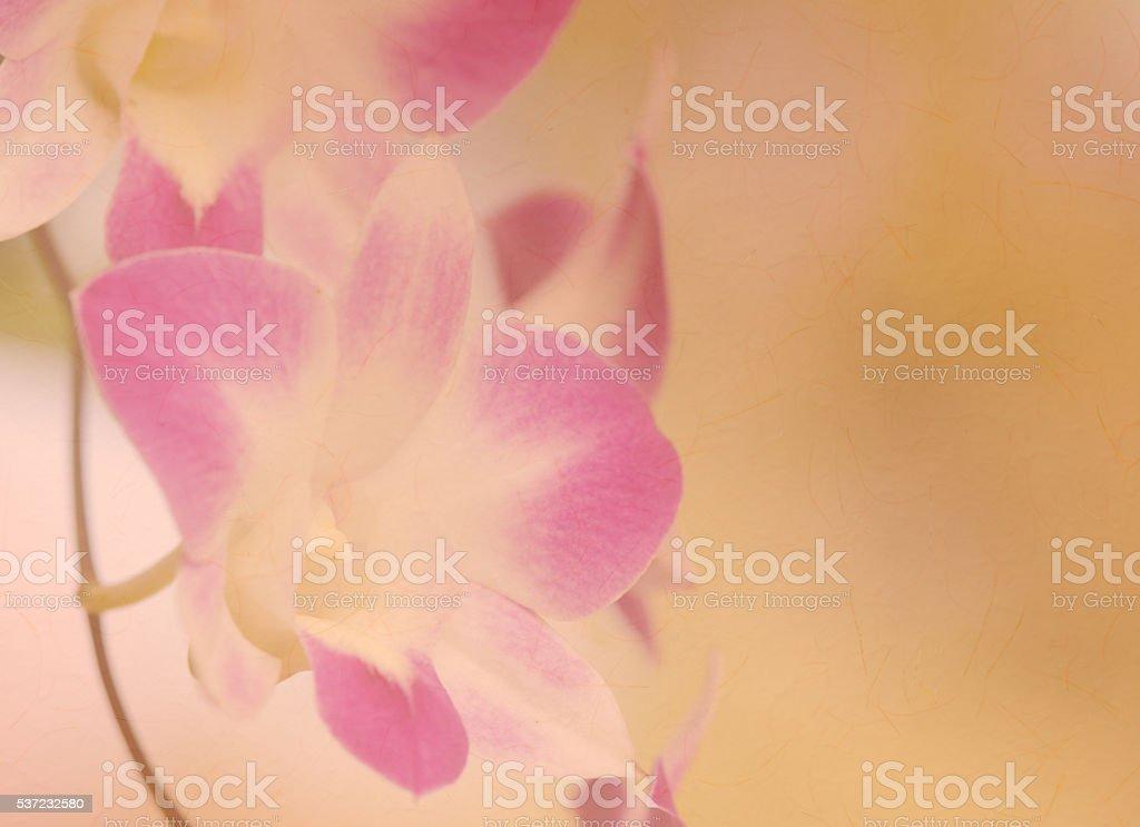 Dendrobium orchid - foto de stock