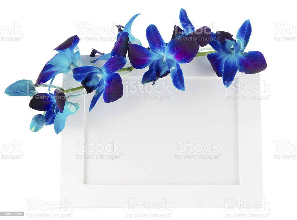 Dendrobium orchid with photo Frame stock photo