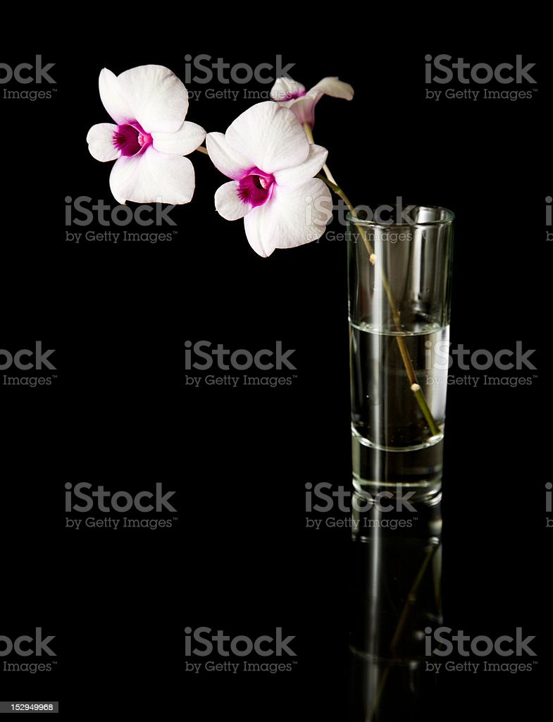 dendrobium royalty-free stock photo