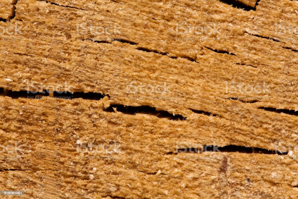 Dendrochronology Stock Photo Download Image Now Istock