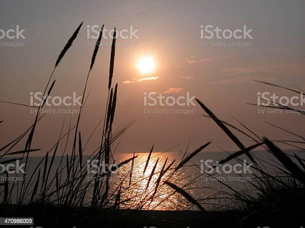 Denmark beach sea oats
