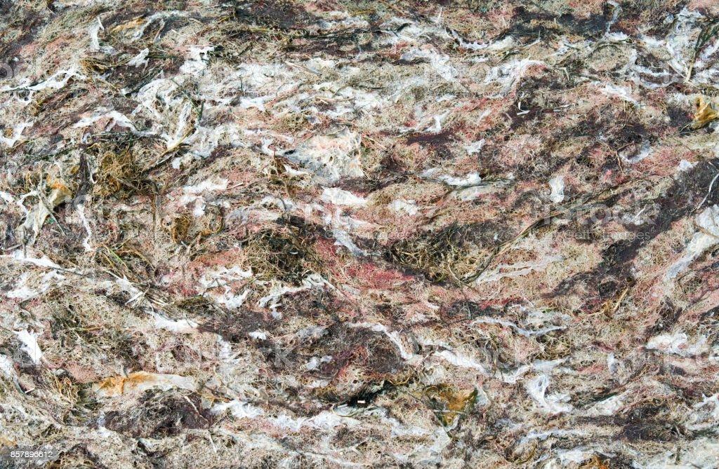 Denmark: Dense carpet of seaweed and algae on the beach in North Jutland stock photo