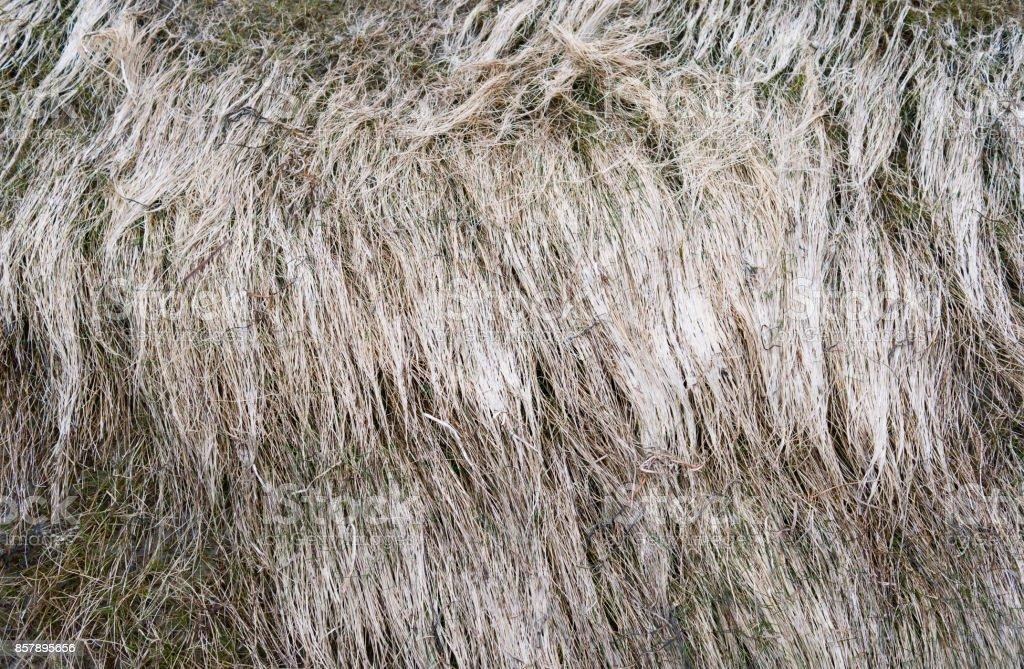 Denmark: Faded beach grass at the shore of the Baltic Sea in North Jutland stock photo
