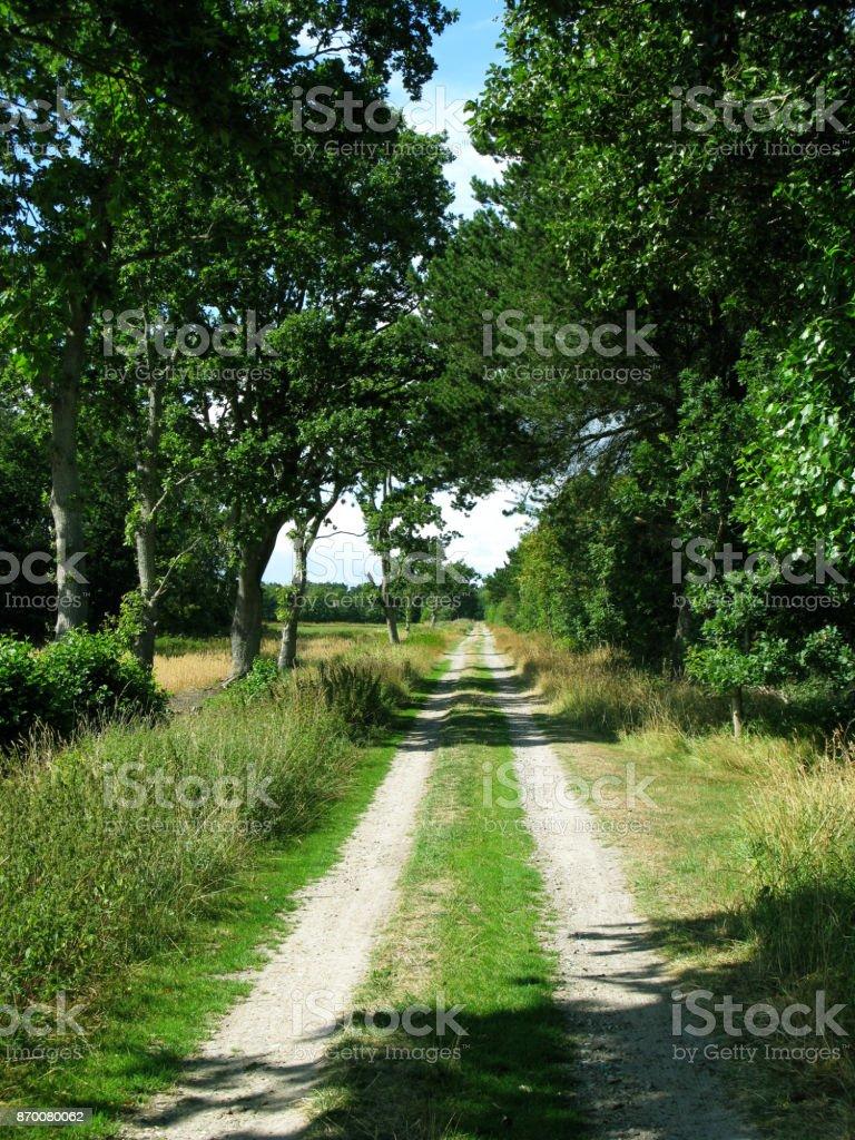 Denmark: Idyllic track across the fields in North Jutland stock photo