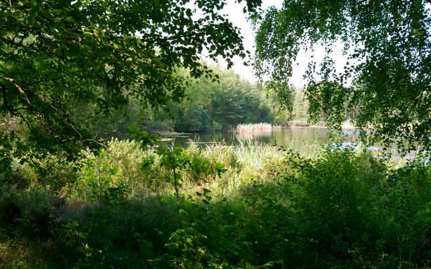 Dänemark: Blick durch die üppige Vegetation über einen idyllischen Teich in Nordjütland – Foto