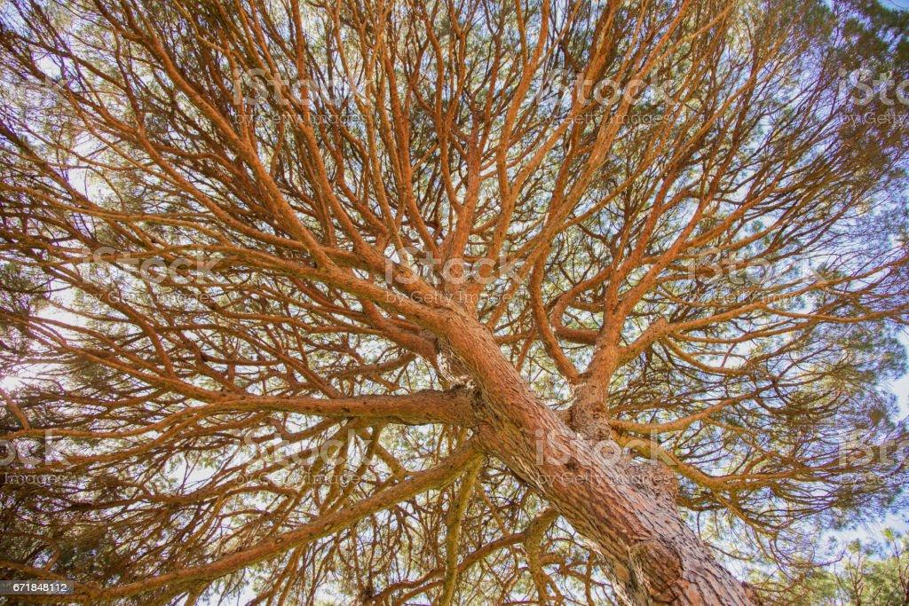 Dense Branches stock photo