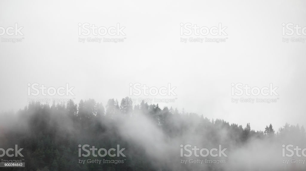 Dense fog covering forest in Norway. stock photo