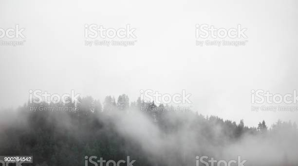 Photo of Dense fog covering forest in Norway.