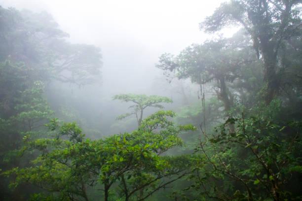 dichter nebel in monteverde nebelwald in costa rica - stockwerke des waldes stock-fotos und bilder