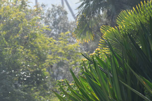 dense foliage with hazy sky - steven harrie stock pictures, royalty-free photos & images