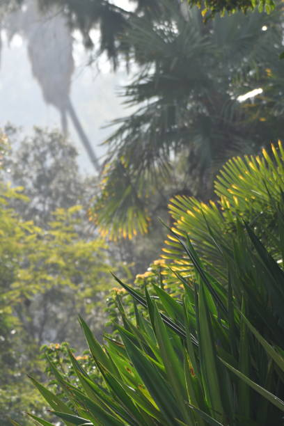 dense foliage with hazy sky vertical - steven harrie stock pictures, royalty-free photos & images