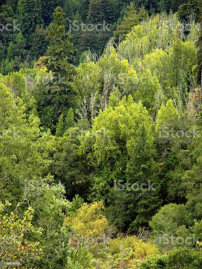 Dense forest and trees royalty-free stock photo