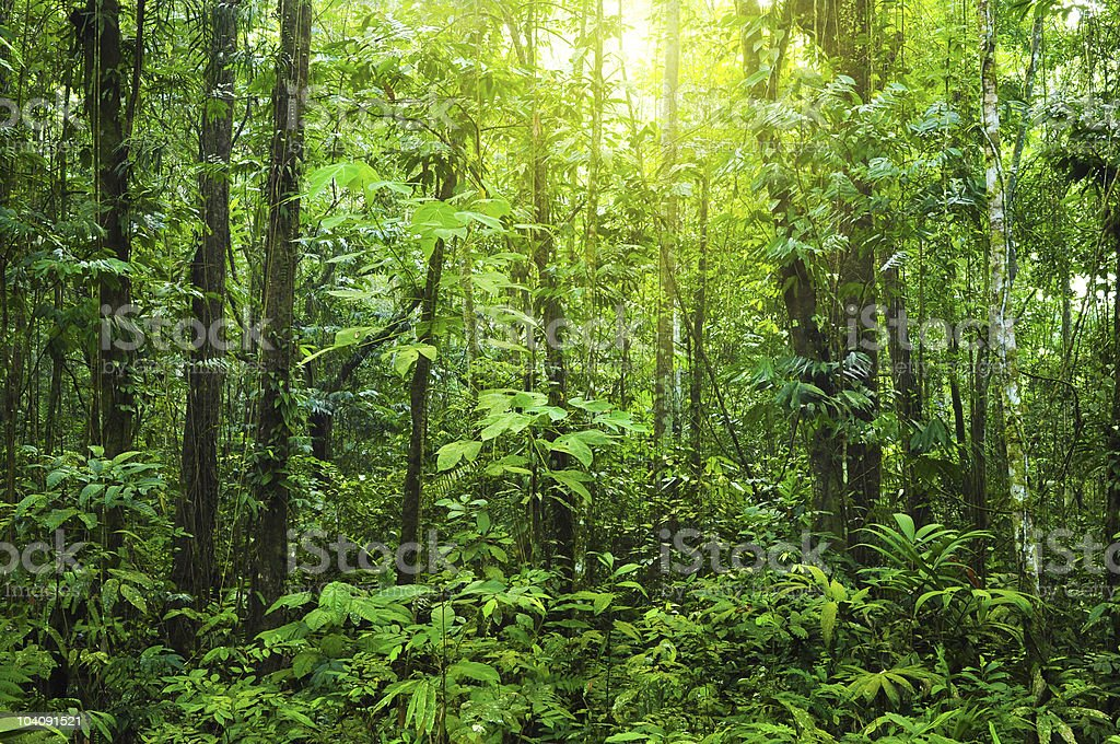 Dense forest stock photo